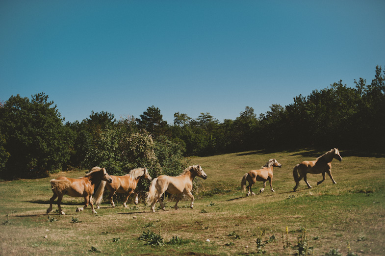 Photo of a unique wedding location with horses.