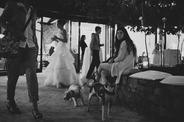 Photos of dogs at the wedding.