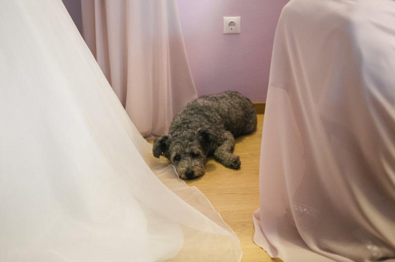 Fotografija kužka na poroki.