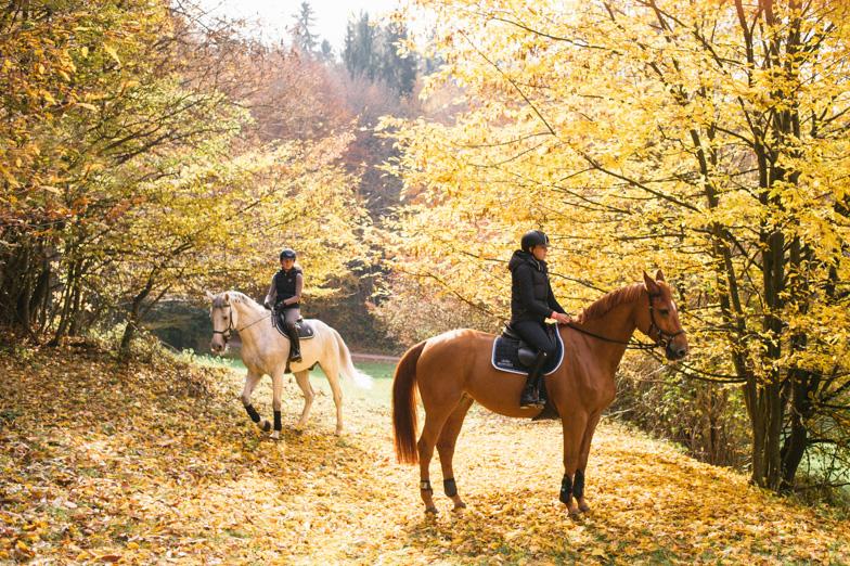 Konji Konjeniškega centra Brdo nad Ihanom.