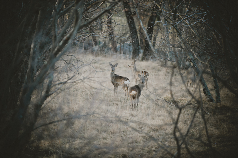 A view of the three roe deer in the forest.
